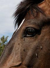 Hevoset_kesälaitumella_10